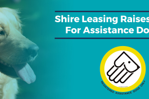 Assistance Dogs UK