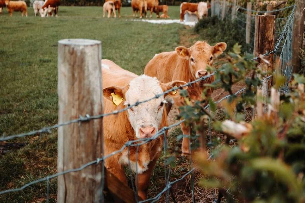Livestock funding